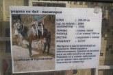 ХИТ! Обява за продажба на магаре взриви мрежата