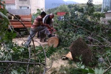 Дърво падна върху автомобила на дупничанин и го потроши, застрахователите отказаха да платят щетите – не са от ПТП