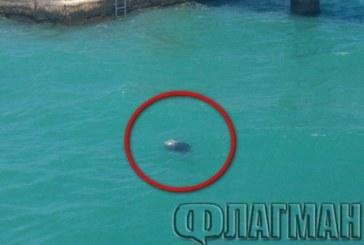 Извънредно! Мъж се удави в Бургас