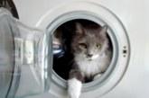 """Котета оцеляха, след като се """"въртяха"""" в пералня"""