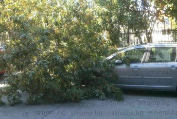 Инцидент в Сандански! Силният вятър стовари клон на дърво върху паркирана кола (СНМИКИ)
