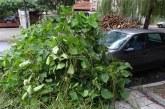 ИНЦИДЕНТ В БЛАГОЕВГРАД! Клон на дърво падна върху кола