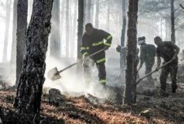 Дават парични премии на всички горски, борили се 6 дни с огнената стихия в Пирин