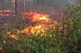 Арестуваха огнеборци за умишлени пожари, палели гората за пари