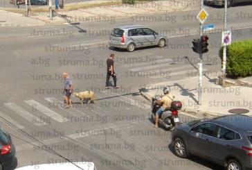 Петричанин събра погледите, вижте какво върза на въже и пресече улицата