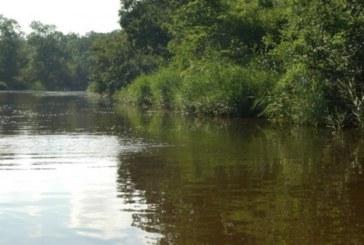 Зловещ обрат и пълна мистерия! Намереният труп в Дунав не е на удавилата се от Козлодуй, тялото е на дете
