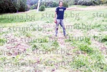 НАШЕСТВИЕ В ЯКОРУДА! Глигани унищожиха 15 дка фасул и картофи, фермери искат намесата на ловците
