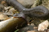 Змия се промъкна в автоборса край Дупница