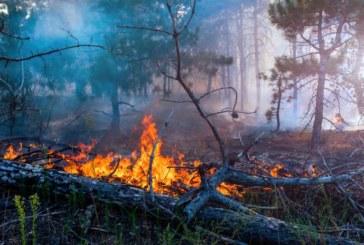 МВР С ГОРЕЩИ НОВИНИ ОТ ДЕФИЛЕТО! Полицаи изведоха 27 от огненото бедствие във Влахи