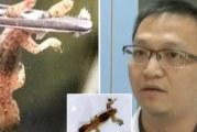 Лекари извадиха жив гущер от ухото на пациент