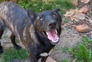Търси се изгубено в Благоевград куче