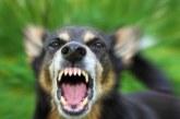 Жена побягна от куче без намордник и си счупи крака