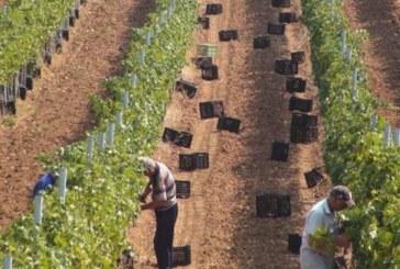 Семейство в Сандански нае работници, но ги чакаше изненада