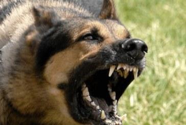 Той насъска озверялото си куче по безпомощна жена, останалото ще ви изненада