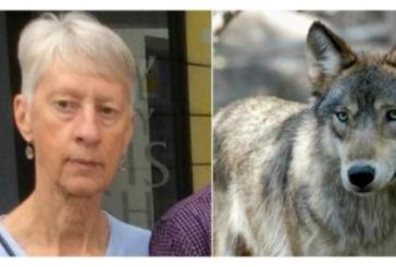 Зловещ инцидент! Вълци разкъсаха до кости туристка в Гърция