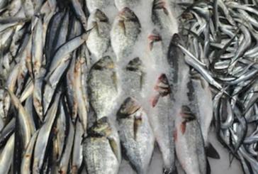 Нова отрова плъзна на българския пазар, риба с олово уврежда черния ни дроб, бъбреците и костите!