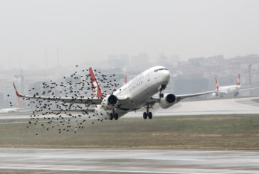 Пътнически самолет лумна в пламъци след удар с птица