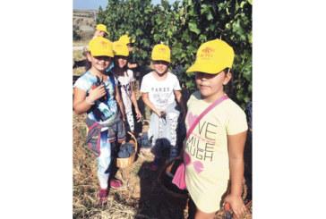 "Собствениците на изба ""Рупел"" прибраха гроздовата реколта с помощта на ученици"