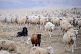 Туристка помоли овчар за снимка! Това, което последва е нечовешко