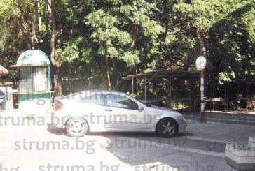 Дърво падна и помля джипа на известната петричка златарка В. Начева-Чечи