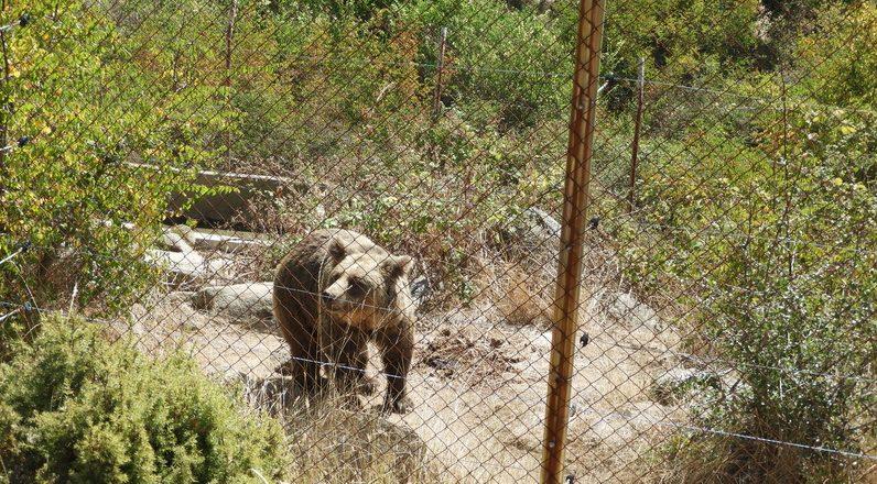 Удариха сдружението на пастира, обвинен в палежа на Пирин! Откриха незаконна мечка