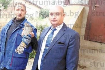 Дърводелец от Кюстендил спаси ястреб, паднал в двора му