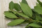 Руски учен препоръчва: Тази билка пази от рак и укрепва здравето