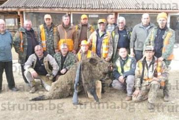 Авджии зарадваха домашните си с прясна мръвка от 130-кг диво прасе
