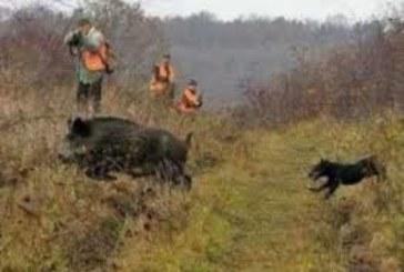 НАСЛУКА! Днес се открива груповият лов на дива свиня