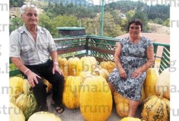 Реколта от над 1 тон тикви-гиганти доби  семейство в двора си в Ощава