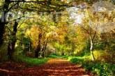 Времето: Слънчево и приятно за разходки