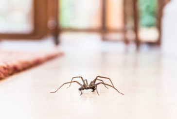 Колко паяка изяждаме през живота си, докато спим