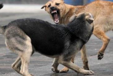 Кучета събориха мъж на земята, започнаха да го ядат, наложи се спешна операция