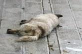 Ескалиращо напрежение в Перник! Граждани питат: Кой и защо трови кучетата?!