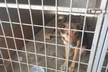 25-г. благоевградчанка спечели конкурса за шеф на приюта за кучета в Дупница, ще работи за 650 лв. месечно