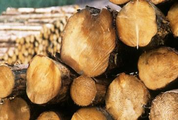 Гранична полиция и горски стражари спипаха кметски наместник от Петричко с крадени дърва