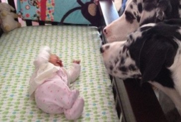 Родители се обърнаха за секунда и оставиха бебето си само с кучето! Когато се върнаха, видяха това …
