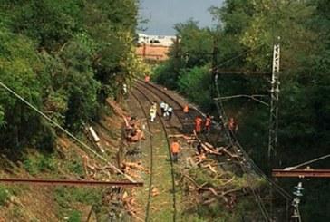 Дърво затапи ЖП линията за София, друго се стовари върху камион