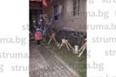 """Елените на Дядо Коледа """"кацнаха"""" на площада в разложкото село Баня"""