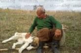 Разгневена санданчанка сигнализира в struma.bg! Тровят ловни кучета с отрова за вълци, гледката е потресаваща