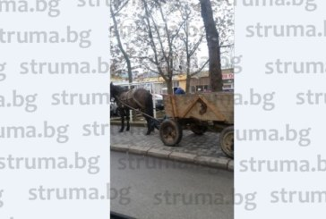 """Фотоокото на struma.bg го закова! Кон с каруца """"паркира"""" в центъра на Благоевград"""