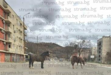 """Безпризорни коне се разхождат на воля в жк. """"Еленово"""""""