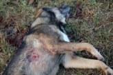 Щракнаха белезниците на санданчанин, застрелял куче