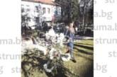 30 елхи блеснаха в атрактивна коледна украса край  водната алея в Разлог
