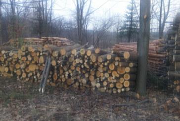 ЗА УЛЕСНЕНИЕ НА ДОМАКИНСТВАТА! ЮЗДП разкри 8 централни склада за проджаба на дърва за огрев