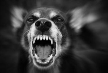 ФАТАЛЕН ИНЦИДЕНТ! Куче уби 3-годишно дете