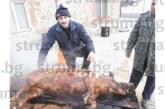 """ФЕЙСБУК СКАНДАЛ! Неврокопчанинът А. Балтаджиев взриви социалните мрежи със снимка на опърлено прасе с надпис """"Айдън"""""""