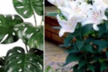 Всички им се радваме, но тези растения буквално ни заплашват живота!