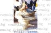 5-г. дъщеря на кмета на Копривлен Л. Банев – Елена, и 9-г. му племенница Йоанна облякоха кукерски костюми за шествието на бабугерите