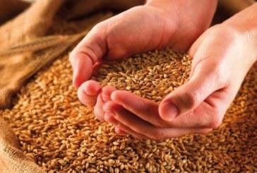 Житото сменя хапчетата за кръвно